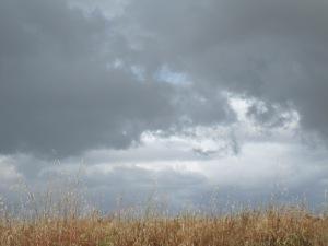 Meadow Sky 1